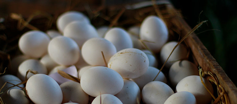 Eggs in a box in Sri Lanka