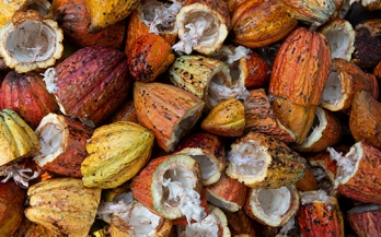 Increasing cocoa productivity through improved nutrition: a call to action