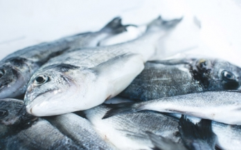 Fish: a rich source of nutrients