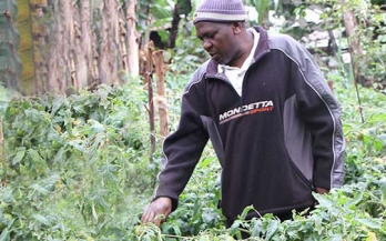 Joseph Mbatia, a fish farmer in Kenya